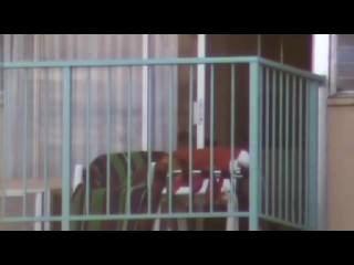 Espiando el balcón