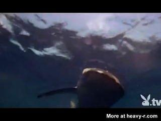 Niñas desnudas en una jaula de tiburones